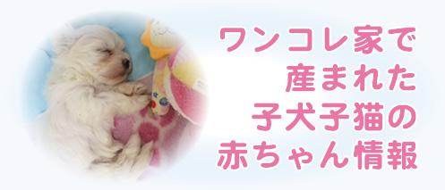 ワンコレ家で産まれた子犬子猫の赤ちゃん情報